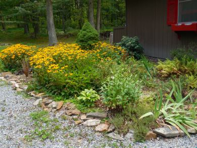 9/28/14: The floppy iris on the right have been replaced by another helleborus.