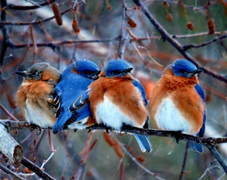 Here's How to Attract the Right Bluebird
