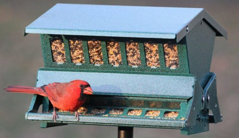 How to use safflower at your bird feeding station?