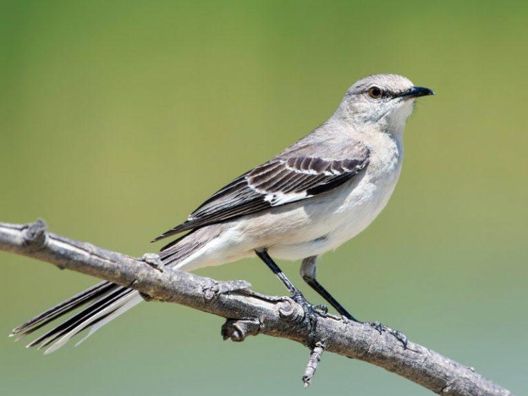 Birds of Washington State