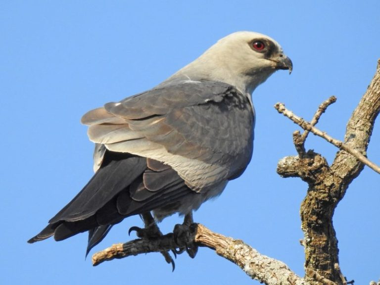 massachusetts birds