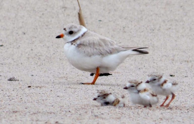 Michigan Birds