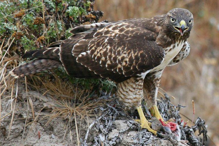 What Eats Birds in The Desert