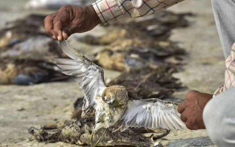 Birds Die