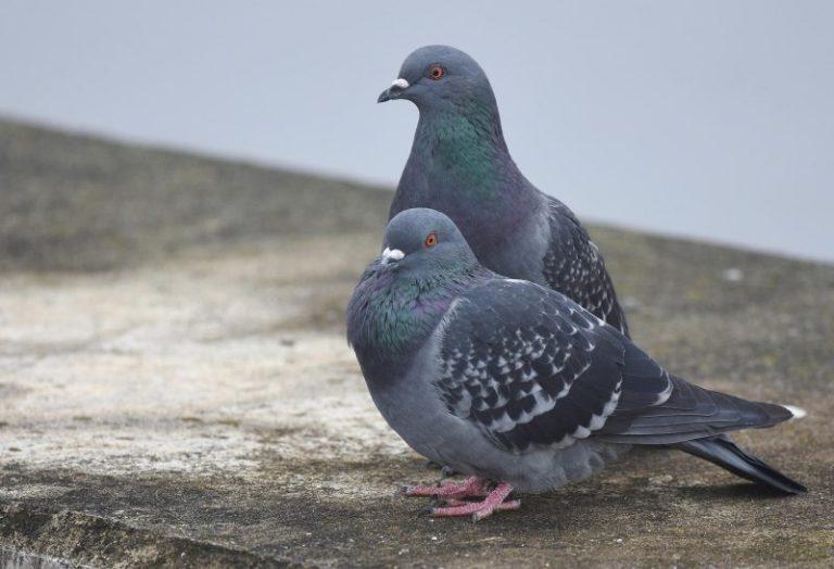 Arkansas Birds