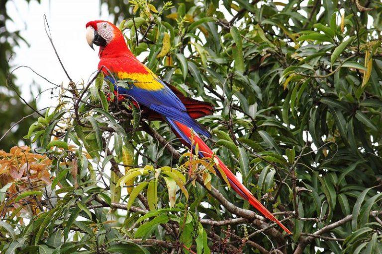 Rainforest Birds