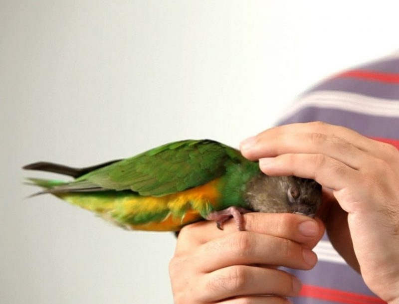 birds treat