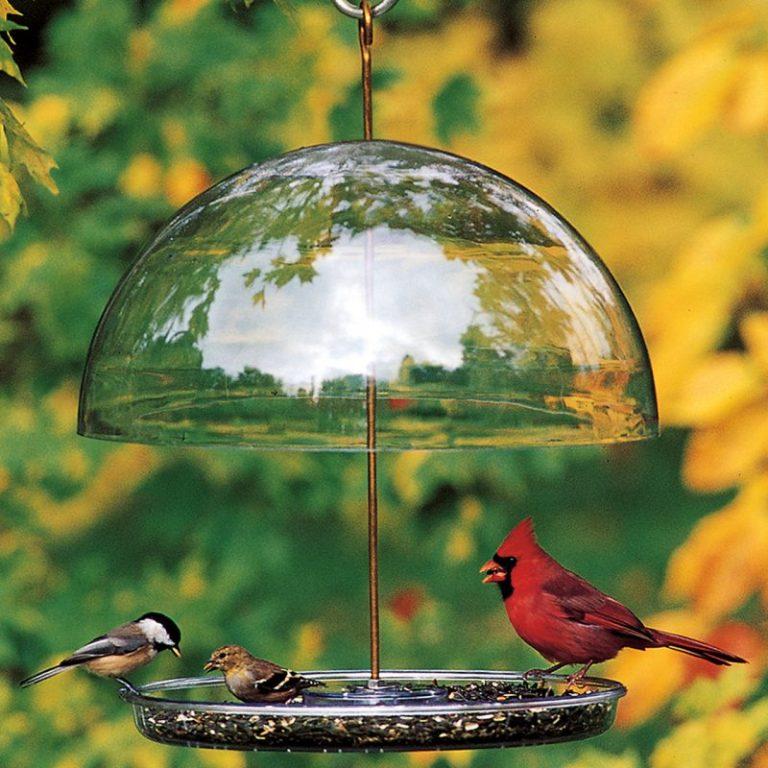 Droll Yankees Cardinal Bird Feeder