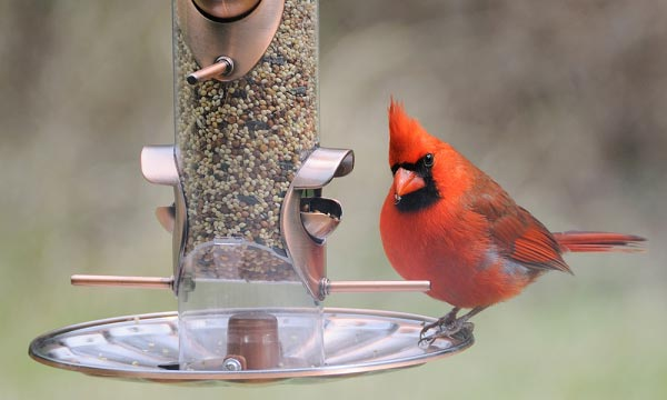 Types of Bird Feeders for Cardinals