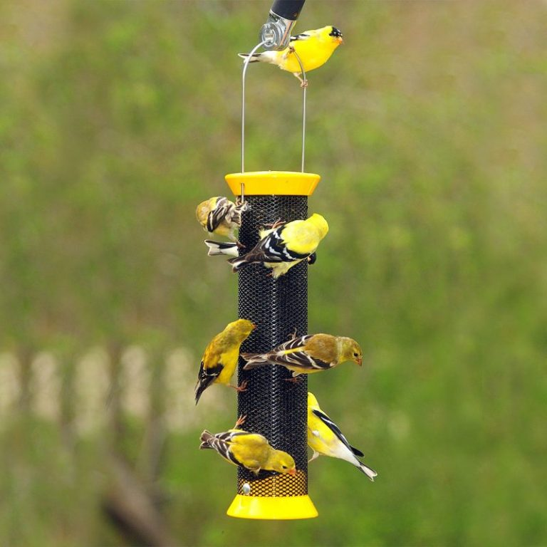 What is a Finch Feeder