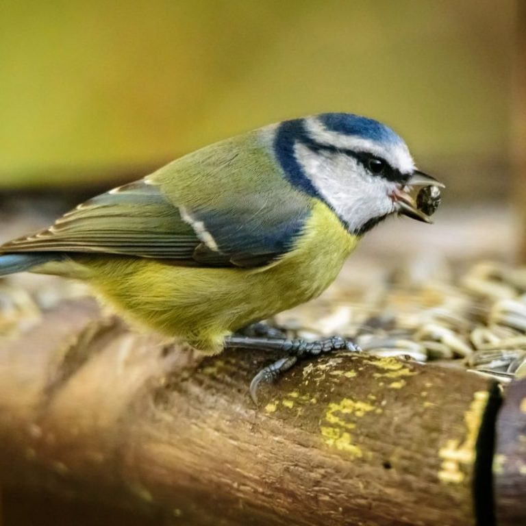 How Long can a Little Bird Stay Without Food?