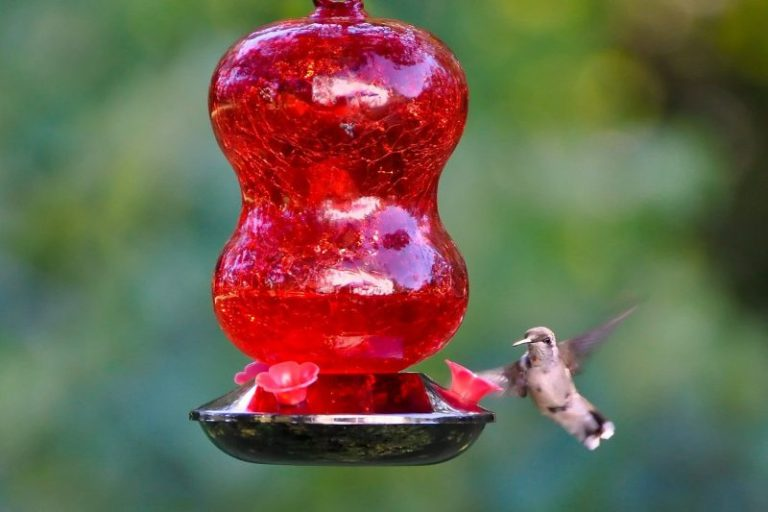 Choose Red Saucer Feeders