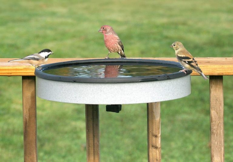 Mounted Heated Bird Baths