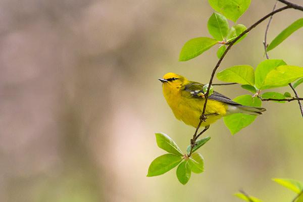 bird photo composition