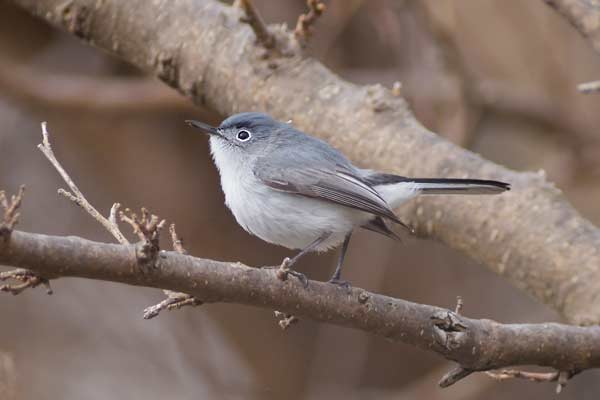 Digiscoping for bird photography