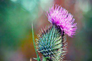 Scottish thistle housing association 2019