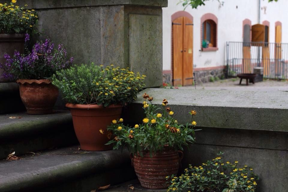 Pots of flowers on stone steps outside stables