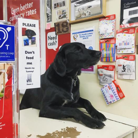 Photo of Jax, a black lab at the Portree Post Office