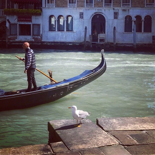 Photo of a gondola and a seagull at the Grand Canal