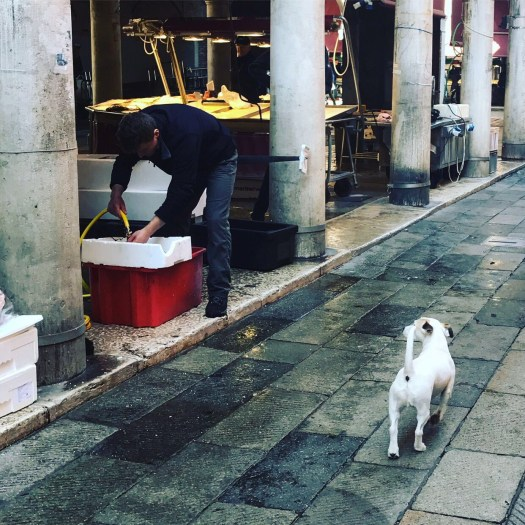 Photo of a little white dog watching a fisherman at the market