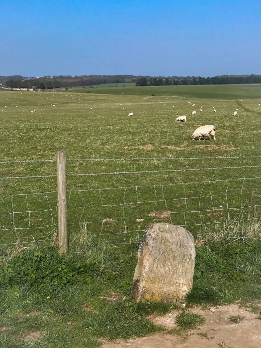 A sheep graving in a field next to a stone with etchings in it