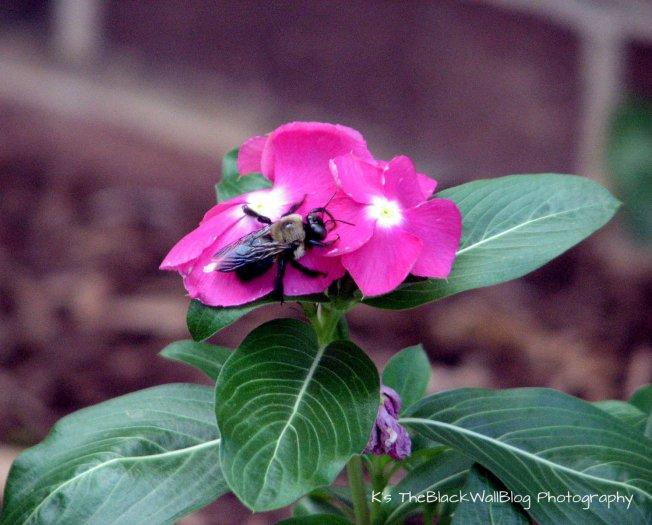 img_6132close-up-bug-on-flower