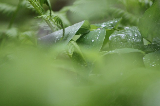 texture and morning dew leaves and fern