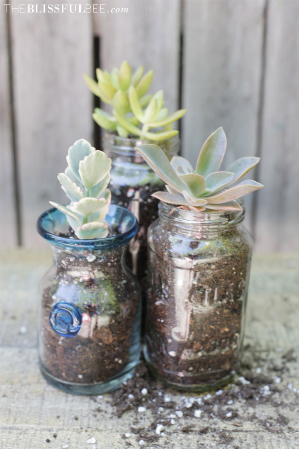 Image result for succulents in a jar