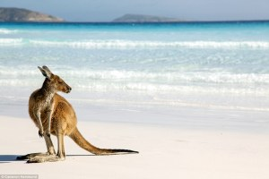 Tips and resources for Work and Holiday Visas in Australia