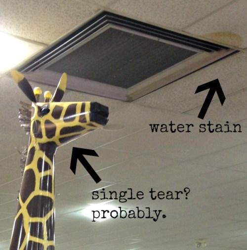 The sadness of a giraffe in captivity.