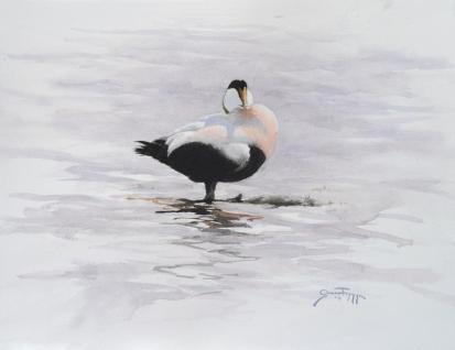 """Ejder, watercolor 13x10"""" - Gunnar Tryggmo"""