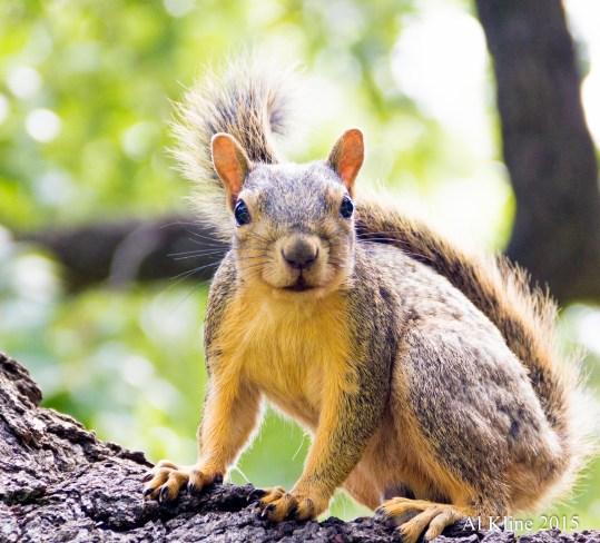 Squirrel Startle