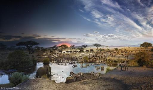 Serengeti National Park, Tanzania, Day to Night, 2015. Courtesy of Stephen Wilkes/National Geographic. © Stephen Wilkes