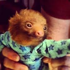I need a baby-sloth-in-pajamas picture. Maybe you do, too.