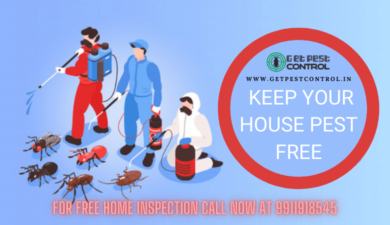 Best Way to Keep Your House Pest-Free