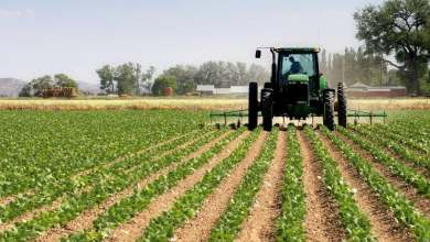 Photo of Best ways to improve agricultural productivity and efficiency