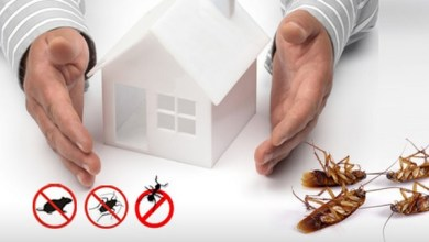 Photo of The Responsibility of Pest Control: The Landlord Versus the Tenant Situation