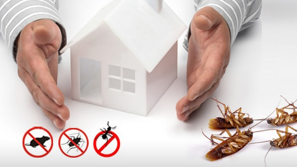 pest control for property in Brisbane