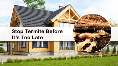 Photo of Best Way to Keep Termite Away from Your Home?