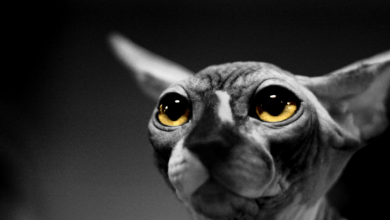 Photo of Hairless Cat Price: Finding a Low-Cost Option