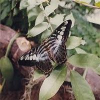 Photo of Why do moths like light?