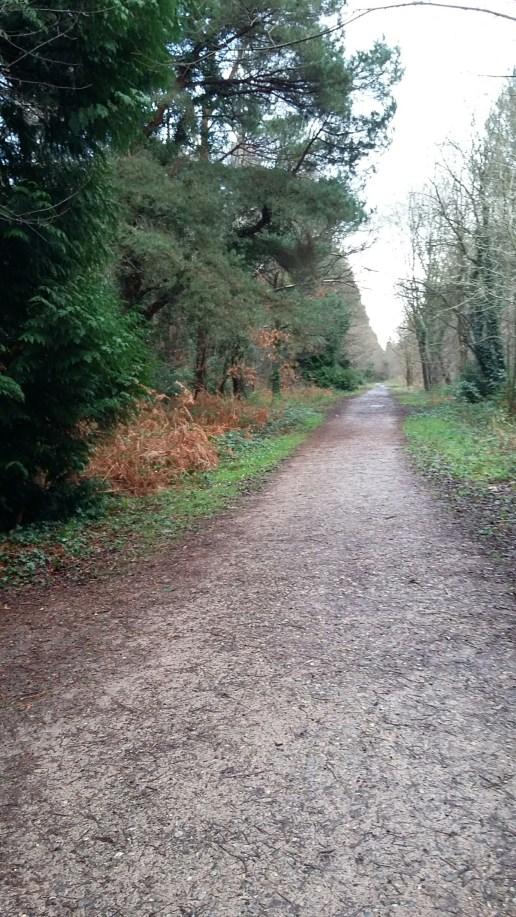 Path through Creech Wood.