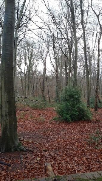 Creech Wood in winter.