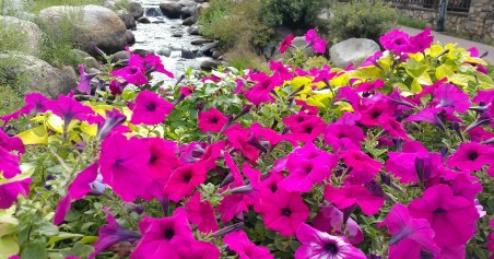 Pretty flowers near the foot bridge and over the creek