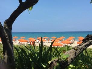 palm-beach-1