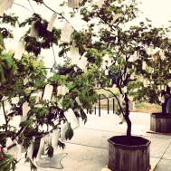 "Yoko Ono's ""Wish Tree"" at the St. Louis Art Museum"