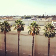 Palm trees out the hotel window in Brea (I know, not quite Los Angeles).