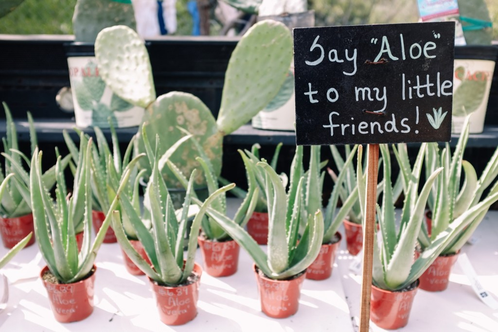 "lots of aloe plants on a table with a sign saying ""Say Aloe to my little friends!"""