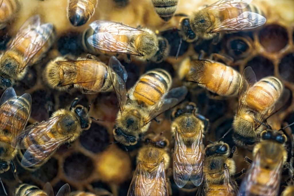 close up group of bees on a honeycomb