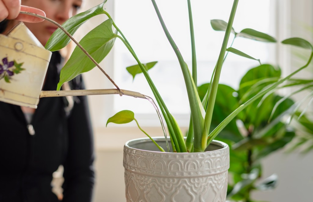 woman watering a houseplant with a vintage watering can